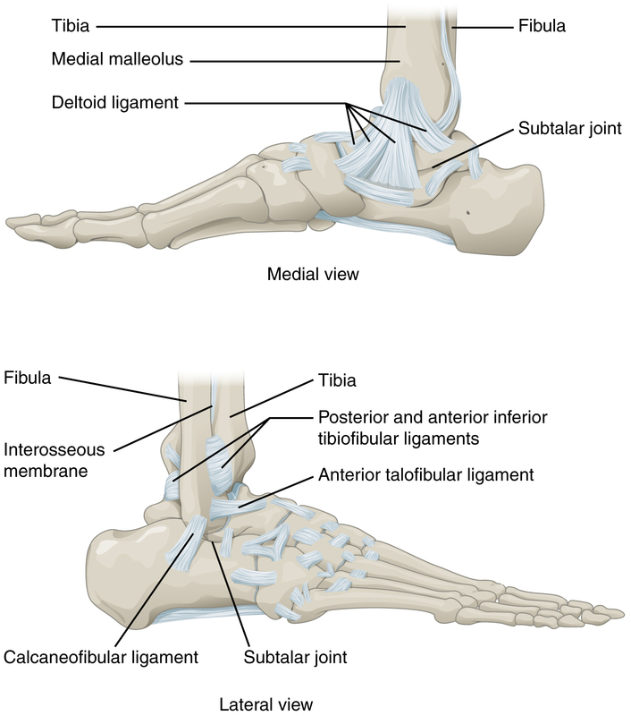 Ankle Joint.jpg