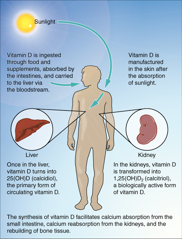 Synthesis of Vitamin D.jpg