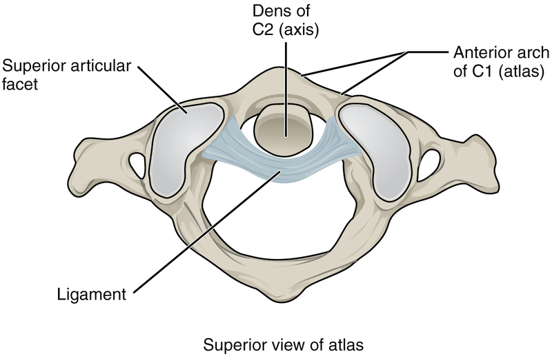 Atlantoaxial Joint.jpg